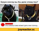 Какую кличку вы бы дали этому псу? Эта собака сама может дать мне кличку...