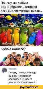 Почему мы любим разнообразие цветов во всех биологических видах... Кроме нашего? Потому что вот кто еще ни разу не воровал велосипед из моего двора, так это попугай...