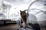 Кот поселился на бывшем военном аэродроме (и даже летает в кабине пилота!),People & Blogs,коты видео,смешное видео про кота,прикол коты,кот на самолете,военный аэродром,кот в кабине пилота,нурс,как кот летает,видео с животными,животные прикол,Кот поселился на бывшем военном аэродроме (и даже летает