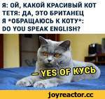 Я: ОЙ, КАКОЙ КРАСИВЫЙ КОТ ТЕТЯ: ДА, ЭТО БРИТАНЕЦ Я ^ОБРАЩАЮСЬ К КОТУ*: DO YOU SPEAK ENGLISH?