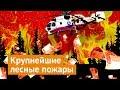 Пожары в Сибири: почему необходимо бить тревогу,News & Politics,варламов,пожары в сибири,сибирь горит,лесные пожары в сибири,горит лес,Greenpeace,варламов про пожары,варламов сибирь,добровольцы,Григорий Куксин,гринпис,россия,чиновники,экономически нецелесообразно,петиция спасите сибирь от пожаров,ка