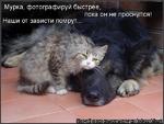 (5оздай[свою]кот.оМатри Щулн alkotomatri^J Мурка, фотографируй быстрее, пока он не проснулся! Наши от зависти помрут...