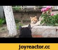 Relaxing Cat Video 92,Pets & Animals,Relaxing Video,relax cat video,the most relaxing video,cat video to relax,soothing cat video,calming cat video,Video for cat lovers,Relax With Cats,Cat video for best relaxation.