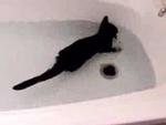 Кот плавает в ванне, прикольно! - FUNLINK.RU,Comedy,,Ваш кот когда-нибудь любил плавать! Этот кот на видео не только любит, так он еще там и веселиться!:)