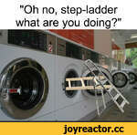 """""""Oh no, step-ladder what are you doing?"""""""