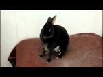 Кроль кричит,Entertainment,,Кричащий кролик!