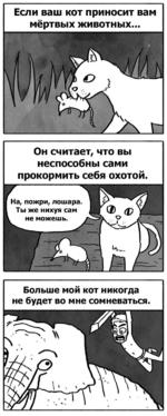 Если ваш кот приносит вам мёртвых животных... Он считает, что вы неспособны сами прокормить себя охотой. Больше мой кот никогда не будет во мне сомневаться