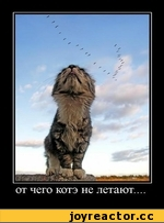 от чего котэ не летают....