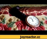 Funny black cat playing with a clock,Animals,,Funny black cat playing with a clock
