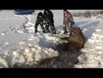 Спасение лосихи Saving the moose,Travel,,Югорские парни не пролетели мимо, спасли от верной гибели лосиху. Заметив с воздуха полынью на болоте с еле заметной торчащей головой лосихи, принялись вызволять её из плена. Судя по первоначальному пролому, который затянулся 5-ти сантиметровым льдом, лоси
