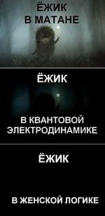 ЁЖИК В МАТАНЕ ЕЖИК В КВАНТОВОЙ ЭЛЕКТРОДИНАМИКЕ ЁЖИК В ЖЕНСКОЙ ЛОГИКЕ