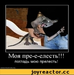 Моя пре-е-елесть!!! погладь мою прелесть! DEMOTIVATORS.RU