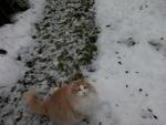 Холст картина маслом кот зима