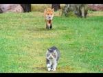 Cats vs  Fox Коты против лисицы,Entertainment,,The battle for food