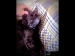 Кот-симулянт / Cat-faker,Animals,,Кот очень крепко спит  Cat sleeps very soundly