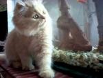 Котенок у аквариума  ,    kattunge , kitten ,,Animals,,Котенок у аквариума , kitten , kattunge