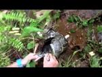 Спасение кота от удава,Animals,,Жесть и Юмор - http://uboyno.ru