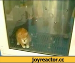 The kitty washing machine,Animals,,The kitty washing machine The music on this clip could not POSSIBLY be funnier. Found on Dumpalink. No expectations, thers NO SPIN. Picture your own opinion