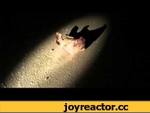 На месте строительства мечети в г.Ставрополь зарыли свинью,News,,Жители г.Ставрополь, наблюдая за бездействием местных властей, решили самостоятельно бороться с исламизацией края.  Итак, русские решили последовать примеру жителей испанского города Севилья, которые на месте строительства мечети зарыл