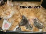 ежкин кот 1 -