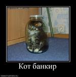 Кот б анкир demotivators.ru