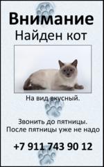Внимание Найден кот На вид вкусный. Звонить до пятницы. После пятницы уже не надо +7 911 743 90 12
